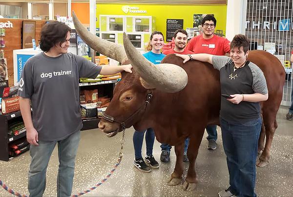 В зоомагазин Petco в Техасе пришли посетители с огромным быком на поводке