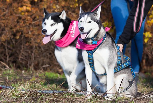 В Москве пройдёт благотворительный забег с собаками «Быстрый пёс»