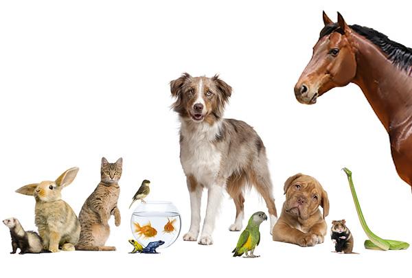 Американская ассоциация производителей зоотоваров (APPA) сосчитала домашних животных в США