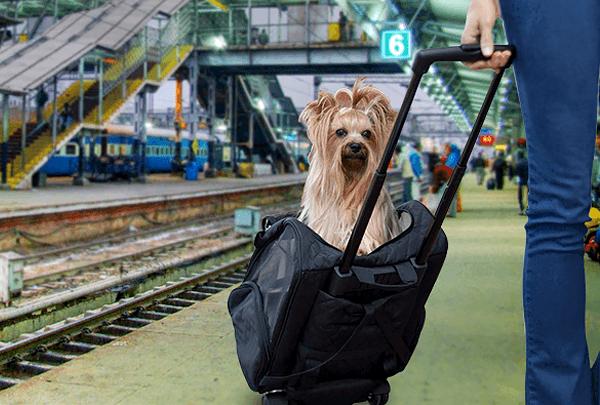 Минтранс подготовил правила перевозки животных по железной дороге
