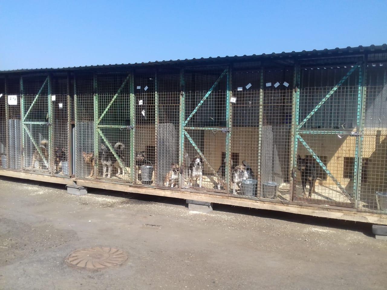 Открывается обновлённый государственный приют для бездомных животных в Щербинке