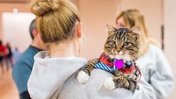 В ноябре в Лас-Вегасе пройдёт «Фестиваль кошек»