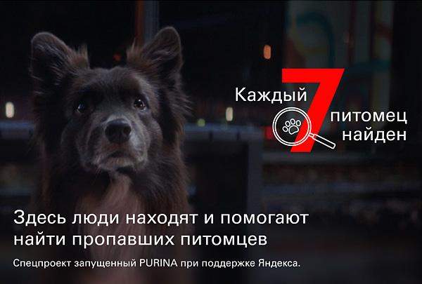 Совместный проект «Яндекса» и Purina по поиску животных заработал по всей России