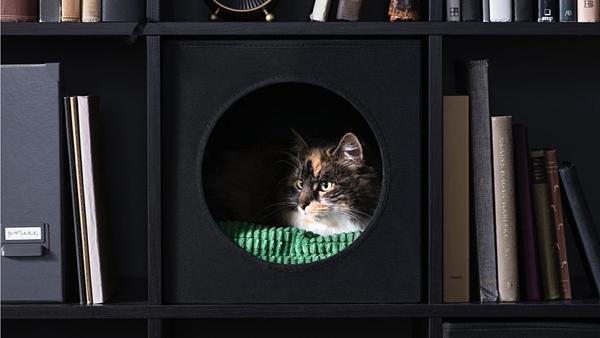 IKEA проводит акцию «Домой с другом»