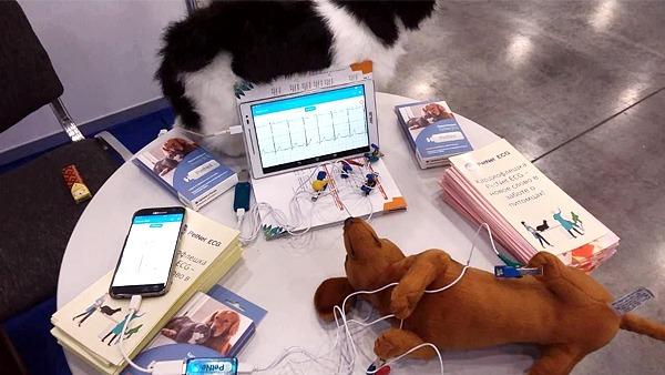 В России создали устройство для снятия ЭКГ у животных в домашних условиях